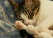 La señora Nase, alias Temblad Sopranas del Mundo, haciéndose la dormida