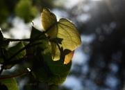 sol_23_04_2011 - luminosidad